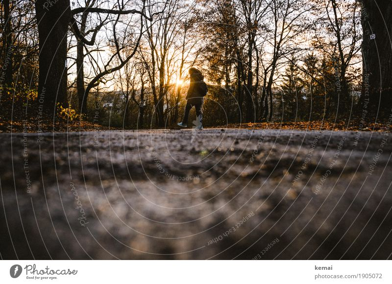 Walk in the evening sun. Lifestyle Harmonious Well-being Contentment Relaxation Calm Leisure and hobbies Trip Human being 1 Environment Sun Autumn