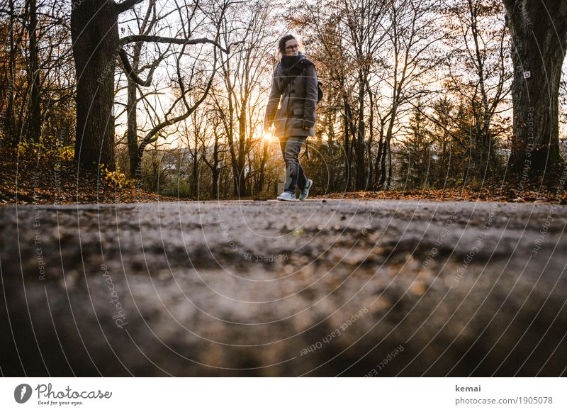 Human being Tree Landscape Dark Adults Environment Street Life Lifestyle Autumn Lanes & trails Movement Feminine Freedom Going Leisure and hobbies