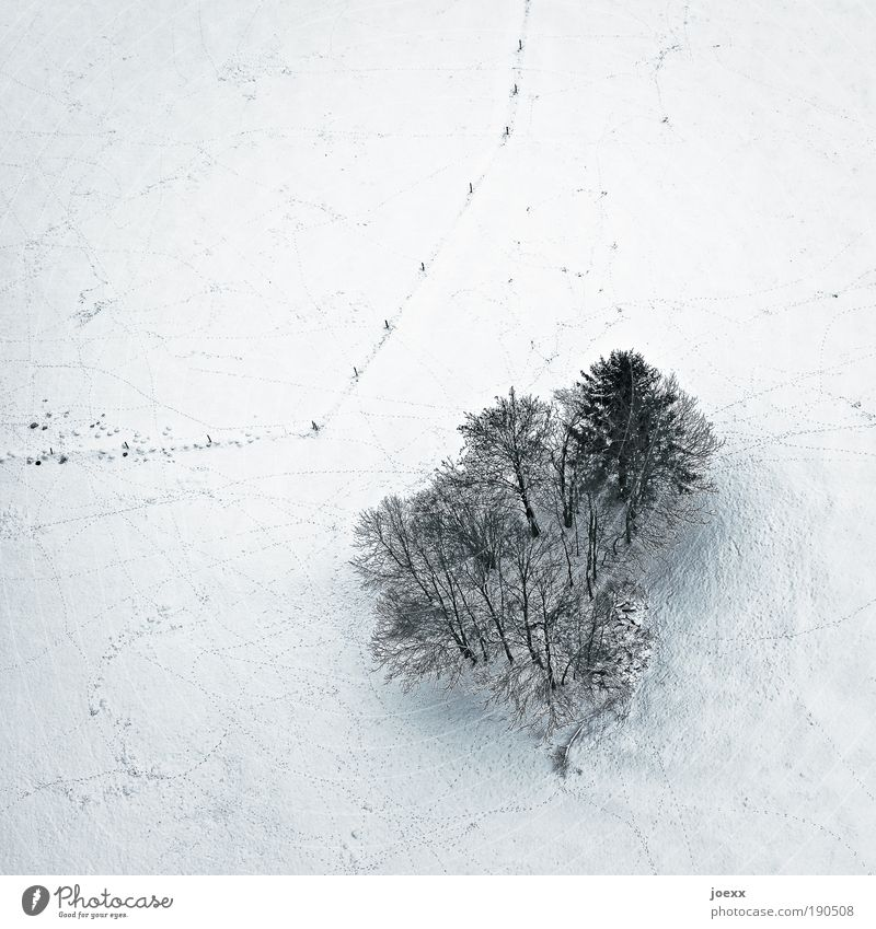 maverick Nature Landscape Earth Winter Snow Tree Field Cold Clump of trees Fence Bird's-eye view Colour photo Subdued colour Exterior shot Copy Space top Day