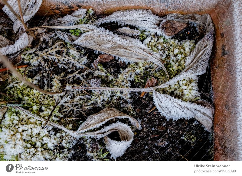 Nature Plant Leaf Winter Environment Cold Senior citizen Natural Death Garden Lie Earth Ice Transience Change Dry