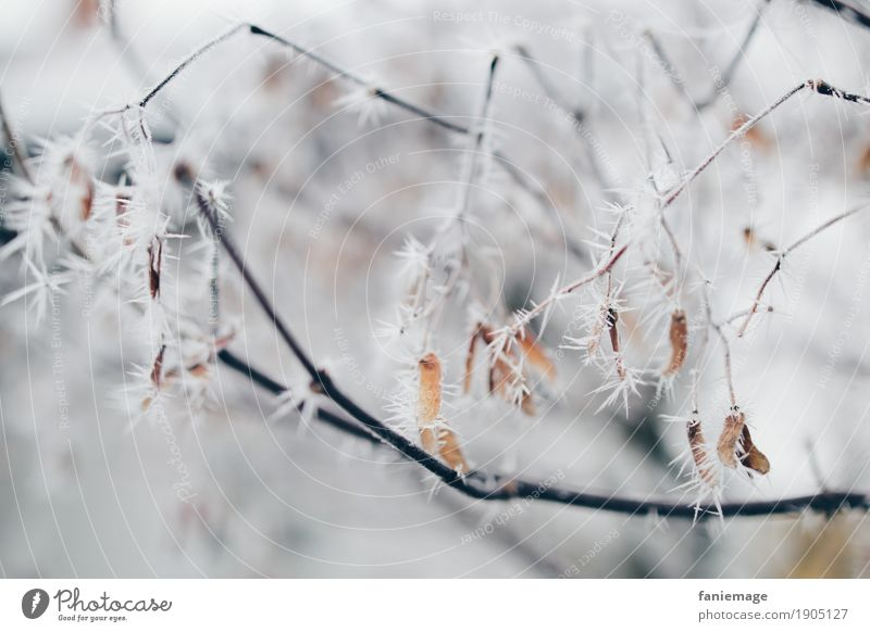 Branches with ice crystals Nature Ice Frost Snow Snowfall Esthetic Bright Cold Beautiful Ice crystal Twigs and branches Prongs Spine Undergrowth Point Branched