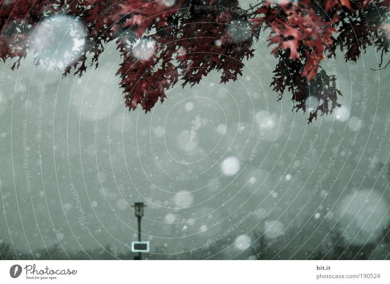 Sky Nature Tree Leaf Winter Environment Dark Cold Snow Snowfall Ice Moody Weather Climate Fog Wet