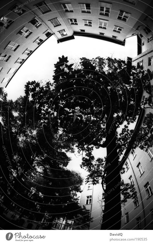Tree City Plant Leaf House (Residential Structure) Facade Round Building Black & white photo Backyard Town house (City: Block of flats) Old town