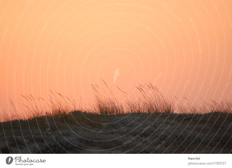 Red sky Relaxation Calm Summer vacation Plant Animal Earth Horizon Wind Black Ground Blade of grass Common Reed Beach dune Dune Colour photo Exterior shot