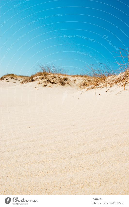 simple beach Copy Space bottom Copy Space top Colour photo Sunlight Summer Beach Desert Blue sky Cloudless sky Summer vacation Vacation & Travel Sand Relaxation