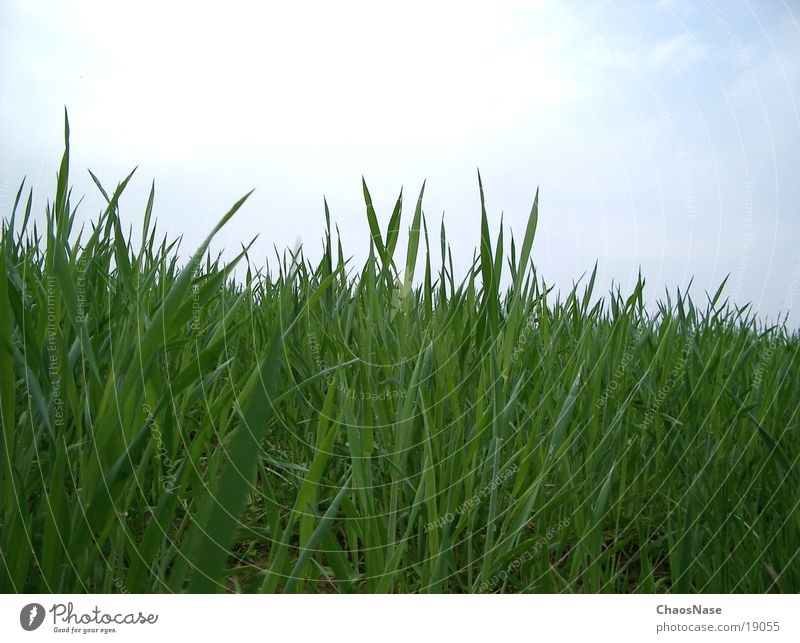 """<font color=""""#ffff00"""">-=auf´n=- proudly presents Meadow Grass Blade of grass Virgin forest"""