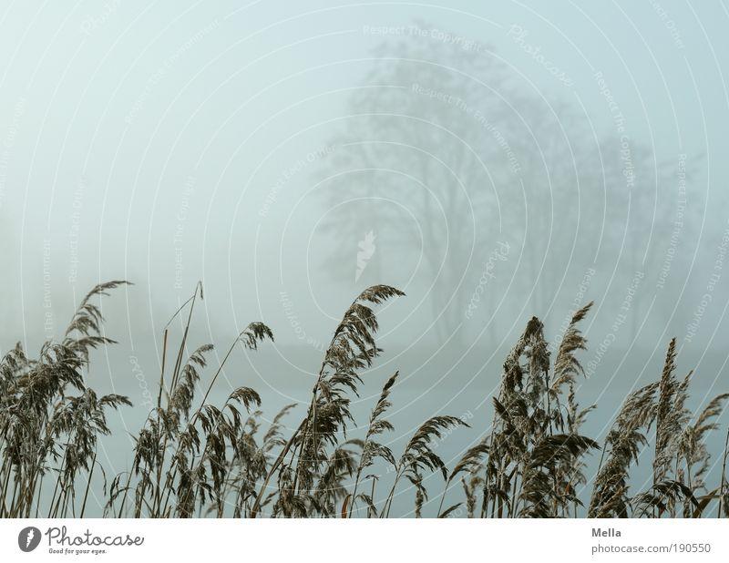 Nature Tree Plant Winter Calm Autumn Grass Gray Lake Park Landscape Fog Weather Environment Break Climate