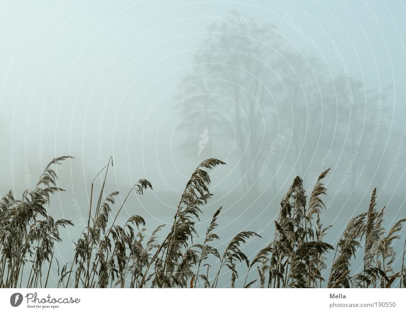 Nature Tree Plant Winter Calm Autumn Grass Gray Lake Park Landscape Fog Weather Environment Break Climate