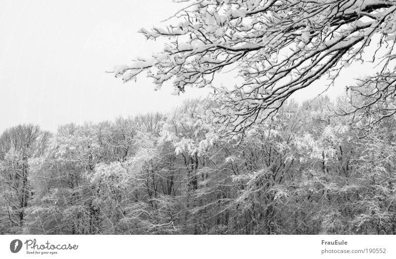 snow chaos Nature Landscape Winter Ice Frost Snow Tree Forest Cold Black White Black & white photo Exterior shot Structures and shapes Deserted Day