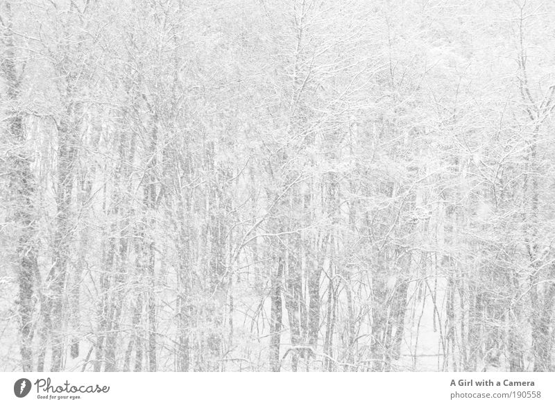 Nature White Tree Winter Clouds Forest Snow Freedom Gray Dream Snowfall Sadness Landscape Bright Environment Wet