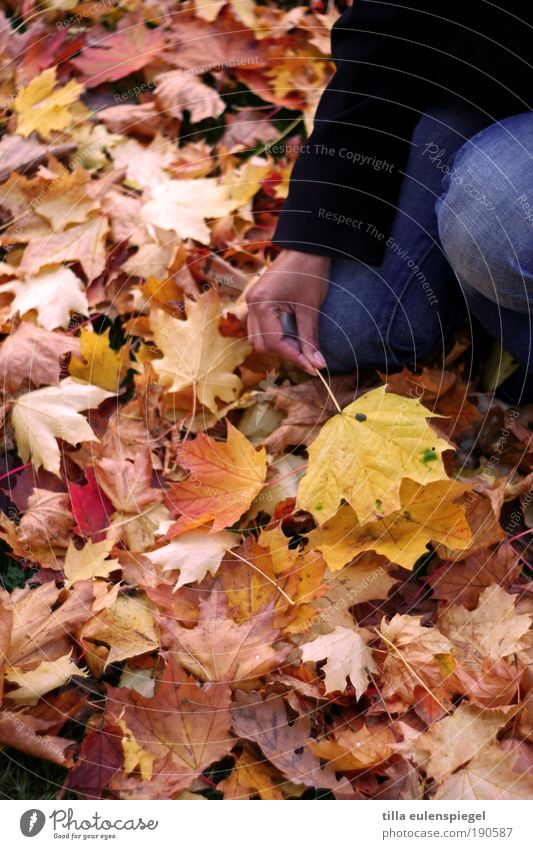 Woman Human being Nature Hand Leaf Calm Adults Colour Yellow Autumn Cold Environment Dream Trip Hope Gloomy
