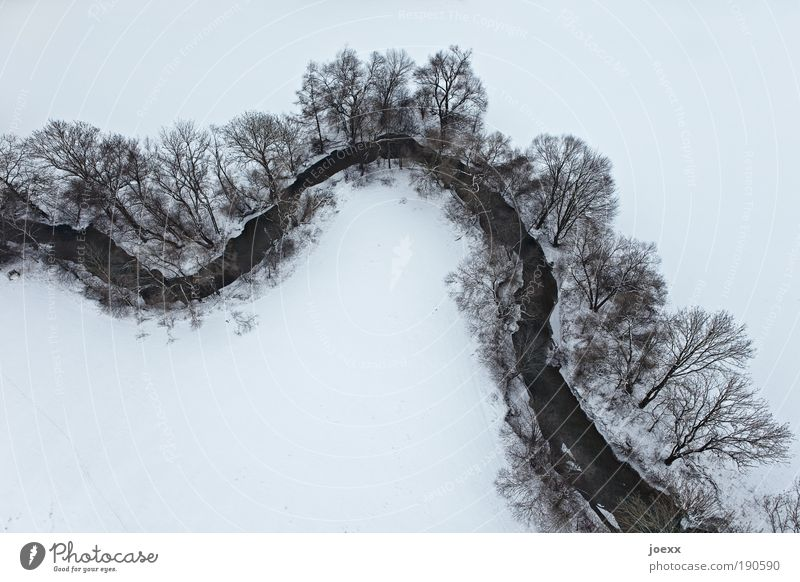 Nature Water Tree Winter Calm Aerial photograph Environment Landscape Cold Snow Above Freedom Earth Bird's-eye view Tall Gloomy