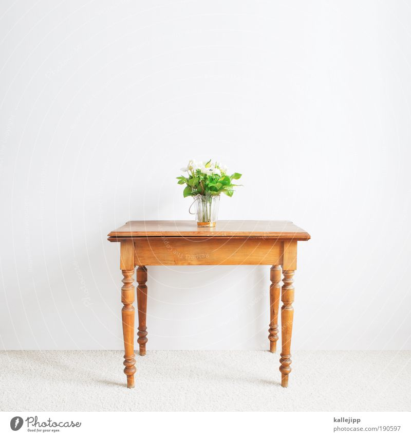 quadrupeds Lifestyle Living or residing Flat (apartment) Interior design Decoration Furniture Table Room Living room Plant Flower Leaf Blossom Brown Green White