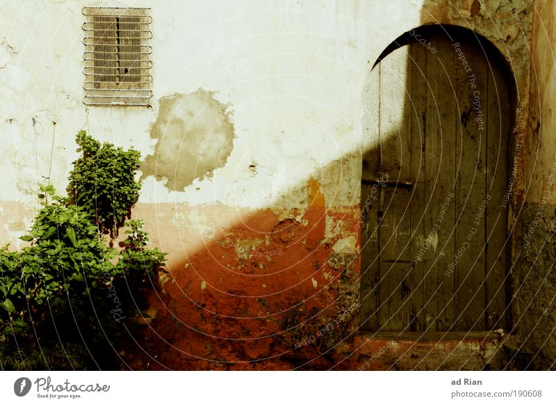 behind closed doors Bushes Foliage plant Morocco Old town House (Residential Structure) Hut Gate Building Architecture Wall (barrier) Wall (building) Garden