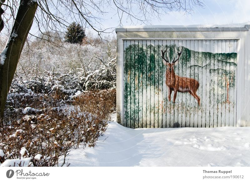 stag Environment Nature Landscape Winter Beautiful weather Snow Plant Tree Forest Outskirts Deserted Building Garage Animal Wild animal Deer 1 Observe Cold