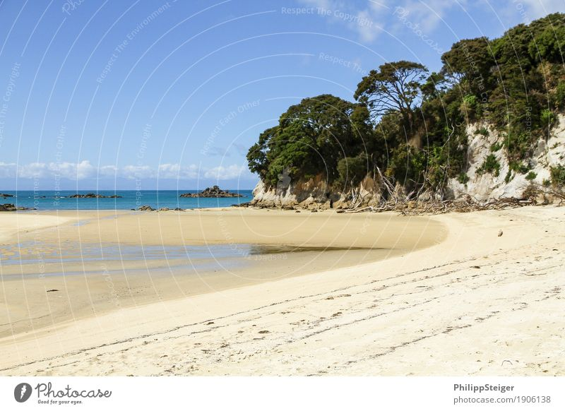 Beach in New Zealand Environment Nature Sand Sky Climate Beautiful weather Coast Bay Ocean Hiking Tree Low tide Low water Travel photography Island Break