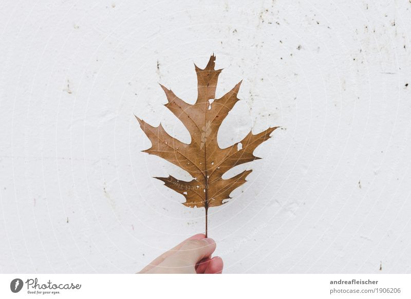 leaf stories Relaxation Calm Trip Thanksgiving Life 1 Human being Environment Nature Plant Autumn Climate change Tree Leaf Foliage plant Select Point Hollow