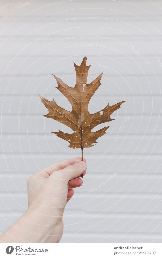 Photo ID: 1906207 Nature Plant Autumn Leaf Select Touch Discover Esthetic Authentic Elegant Natural Gloomy Brown Gold White Discovery Beach hut Wooden house