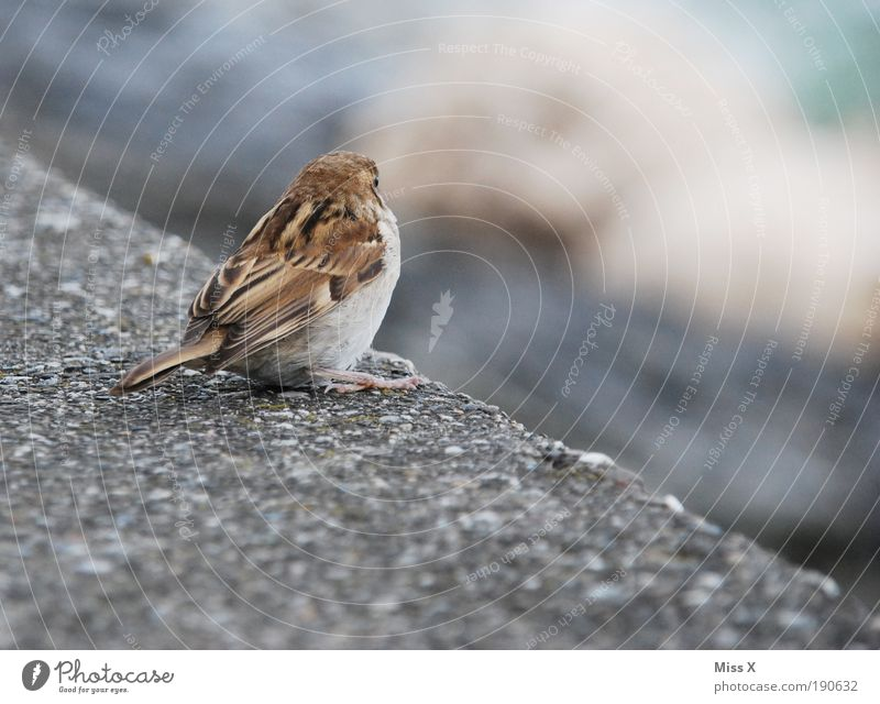 Loneliness Animal Wall (building) Wall (barrier) Bird Small Cuddly Sparrow Building Baby animal