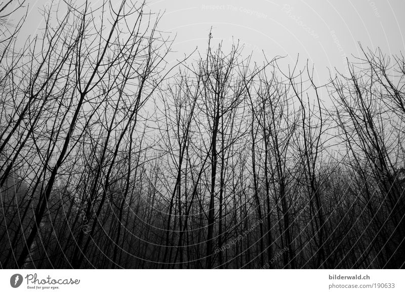 cool coolness Cold Fear Tree Winter Gray Dread Black & white photo Exterior shot Deserted Contrast Silhouette Worm's-eye view Day