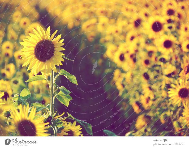 Field of Dreams. Nature Landscape Esthetic Environment Environmental protection Summer Sunflower Sunflower seed Sunflower oil Sunflower field Many Summery