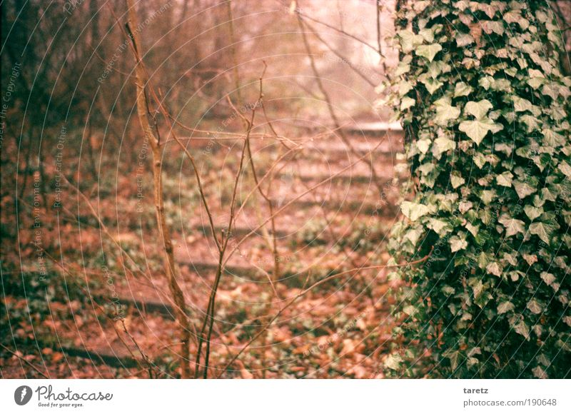 Nature Old Green Tree Plant Red Leaf Calm Loneliness Autumn Lanes & trails Park Brown Fog Stairs Transience
