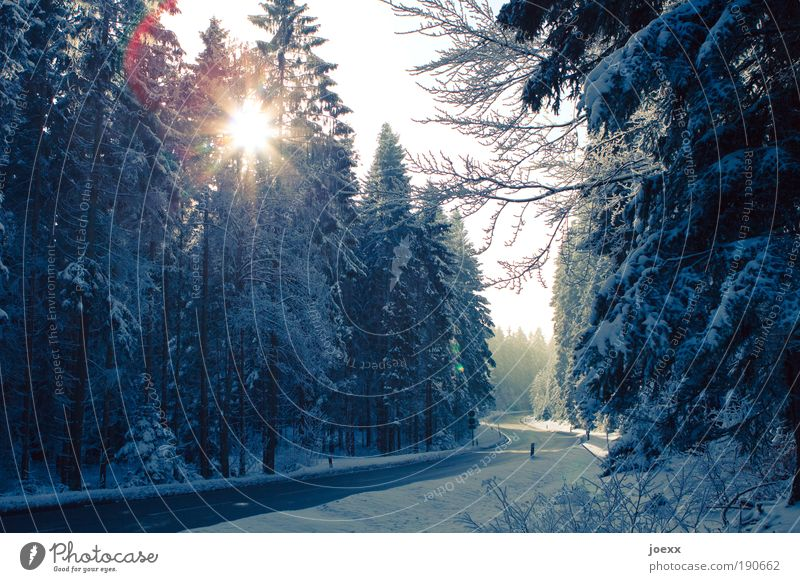Nature Sky Tree Winter Street Forest Snow Speed Safety Traffic infrastructure Snowscape Coniferous forest