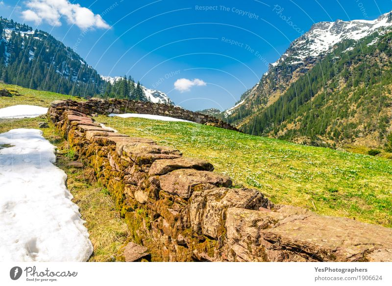 Early spring in the swiss Alps Relaxation Vacation & Travel Tourism Trip Freedom Sun Winter Snow Winter vacation Mountain Hiking Nature Landscape Spring Flower