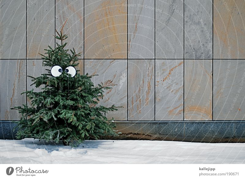 Nature Christmas & Advent Tree Winter Environment Eyes Snow Life Wall (barrier) Ice Feasts & Celebrations Climate Decoration Frost Symbols and metaphors Trash