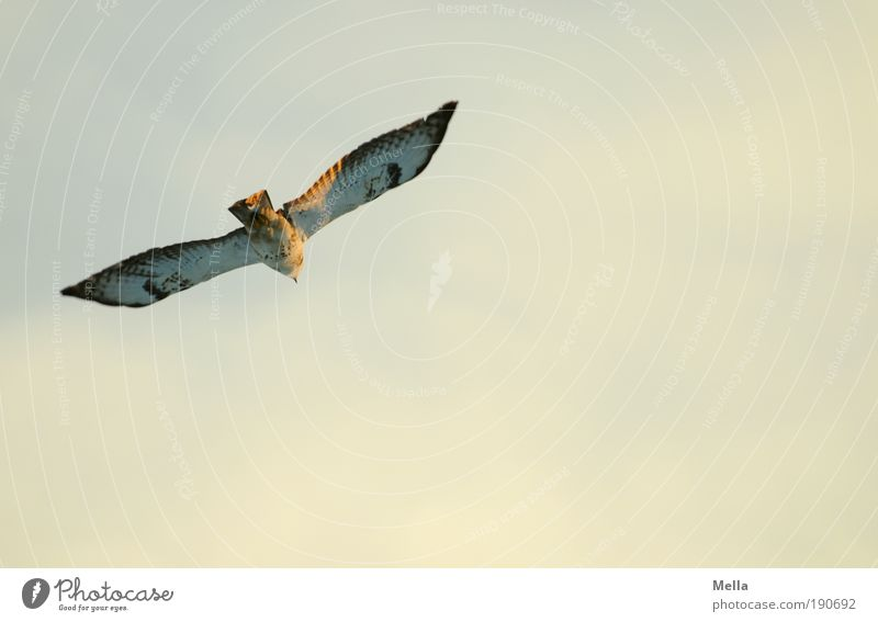 Nature Sky Calm Animal Life Freedom Air Moody Bird Environment Flying Perspective 1 Joie de vivre (Vitality) Infinity