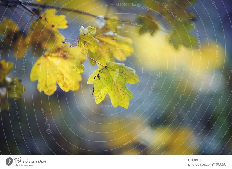 Nature Blue Beautiful Tree Leaf Calm Relaxation Yellow Autumn Park Contentment Fresh Happiness Branch Joie de vivre (Vitality) Well-being