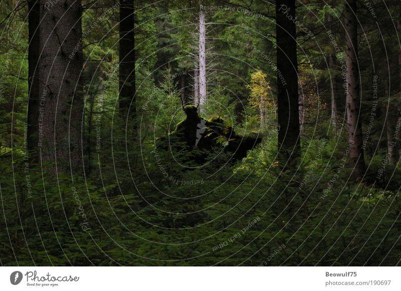 Demon or deadwood Nature Tree Plant Forest Autumn Emotions Environment Bushes Mysterious Curiosity Moss Surrealism Senses Surprise Fern Perturbed