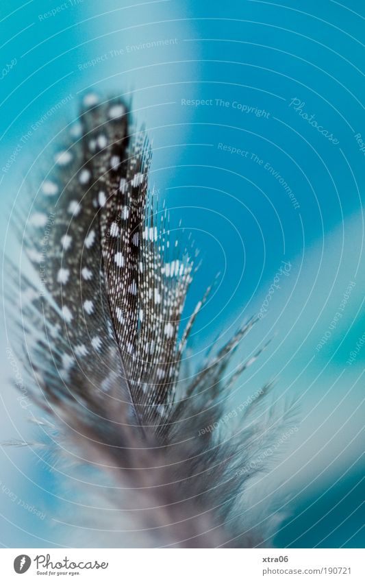 Elegant Esthetic Feather Simple Kitsch Copy Space Colour photo Interior shot Turquoise Spotted Macro (Extreme close-up)