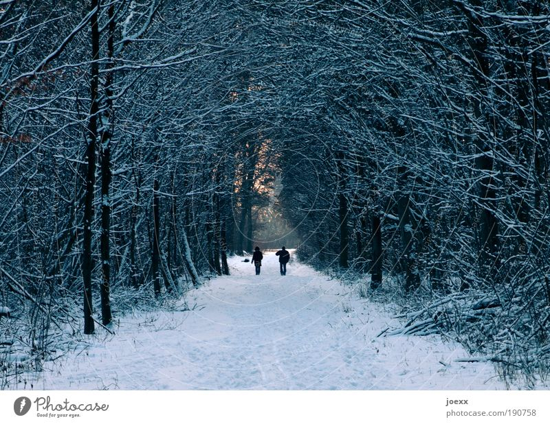 bow Life Trip Winter Snow Winter vacation Man Adults Couple Partner Nature Ice Frost Forest Going To enjoy Cold To go for a walk Footpath Light Branch