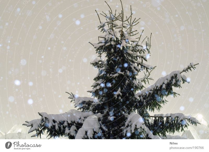Nature White Tree Green Winter Snow Snowfall Park Ice Weather Environment Earth Frost Climate Night sky Point