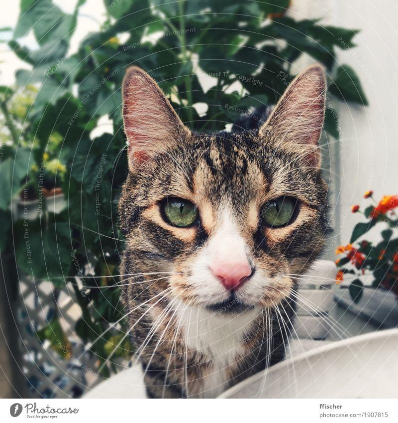 Hello, nice to meowt you Balcony Terrace Animal Pet Cat 1 Curiosity Green Interest Discover Colour photo Exterior shot Close-up Blur Portrait photograph Looking