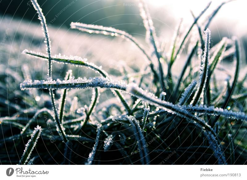 Nature Blue Plant Winter Cold Snow Grass Ice Environment Wet Frost Seasons Ice crystal