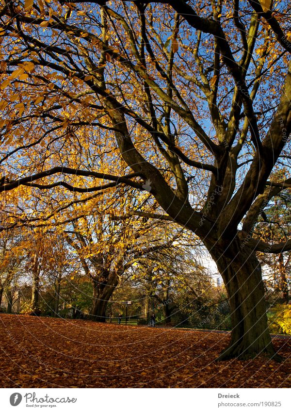 Nature Beautiful Tree Sun Blue Plant Leaf Yellow Colour Forest Relaxation Autumn Park Landscape Bright Moody
