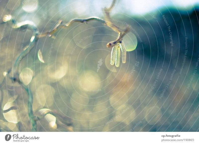 Nature Plant Sun Winter Natural Fresh Bushes Drops of water To enjoy Wet Hope Foliage plant Birch tree