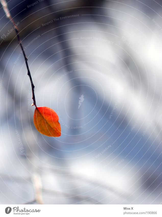 Nature Red Plant Leaf Loneliness Winter Autumn Small Park Bushes Gloomy Branch Shallow depth of field