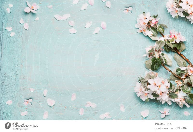 Spring background with beautiful spring blossoms Style Design Feasts & Celebrations Mother's Day Easter Nature Plant Leaf Blossom Garden Blossoming Love Pink