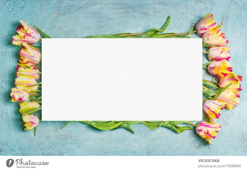Nature Plant Flower Leaf Joy Yellow Blossom Love Spring Background picture Style Feasts & Celebrations Design Decoration Blossoming Paper