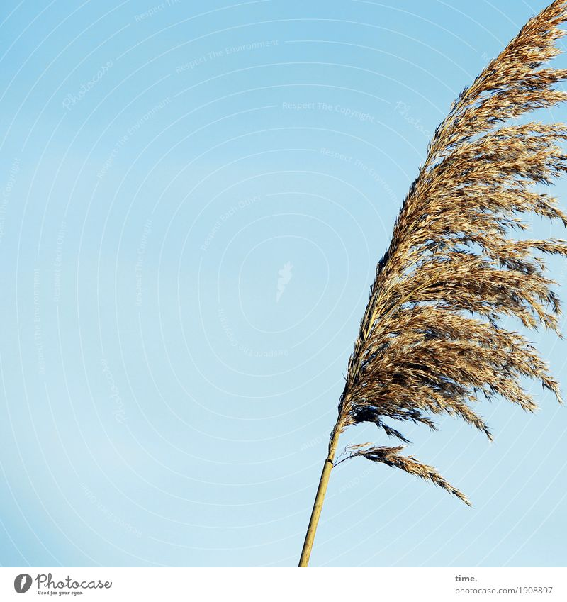 Sky Nature Plant Life Movement Grass Time Growth Elegant Esthetic Authentic Stand Perspective Beautiful weather Joie de vivre (Vitality) Change