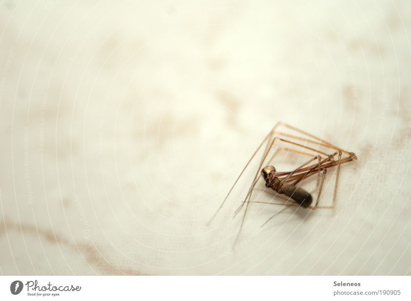 Animal Death Legs Lie Gloomy Animal face Insect Spider Human being Dead animal