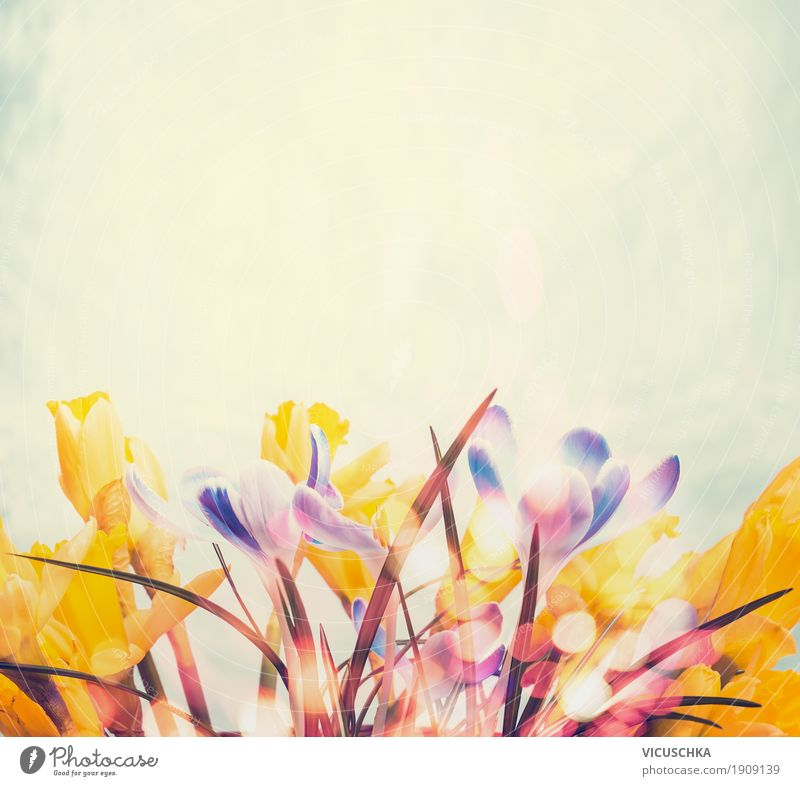 Spring background with different spring flowers Lifestyle Design Garden Decoration Nature Plant Flower Blossom Yellow Style Background picture Crocus Narcissus