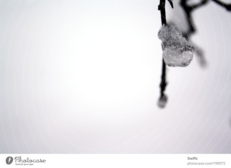 Winter Feelings Frost Ice Ice crystal Crystal Freeze chill Gray Silver White melancholically Winter mood Frozen Minimalistic natural Winter light