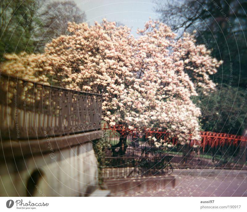 Alone in Kyoto Tree Blossoming Cherry blossom Park Spa gardens Fence Handrail Bridge railing Red Japan Asia Liquid
