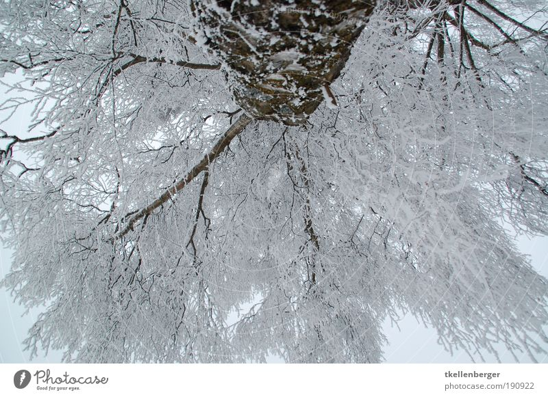 I'm looking at the air. Environment Nature Clouds Winter Climate Ice Frost Plant Tree Branch Twigs and branches snow-laden White Park Freeze Large Cold Brown