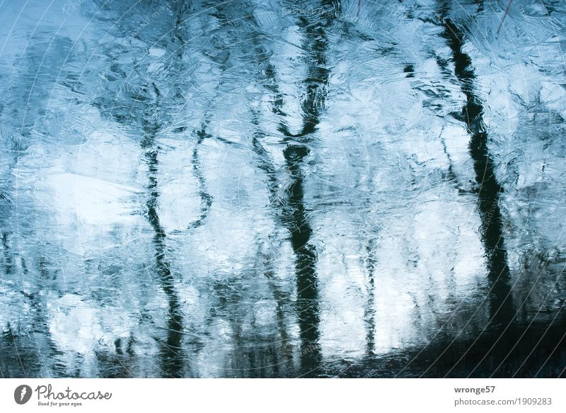 ice age Nature Earth Air Water Sky Winter Ice Frost Tree Lakeside Freeze Cold Blue Brown Black Turquoise Ice sheet Mirror image Reflection Sky blue Colour photo