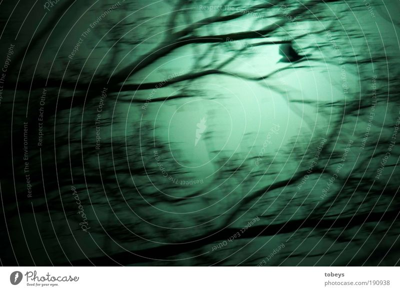 Tree Loneliness Dark Dream Bird Fear Going Flying Threat Mysterious Emotions Panic Mystic Raven birds Enchanted wood